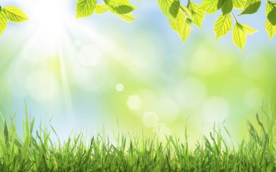 Abstract sunny spring background with grass and leaves